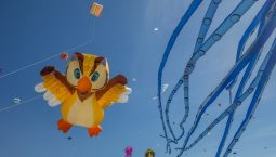 International Kite Festival 2020 in Gujarat
